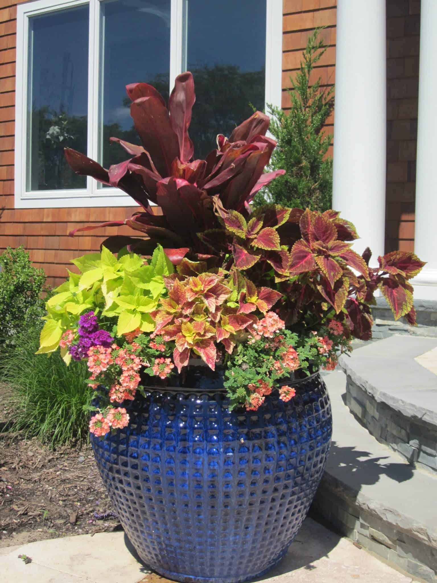 36 inch Glazed Diamond Pottery planted with Coleus, Tie, and Verbena - Southampton, Long Island