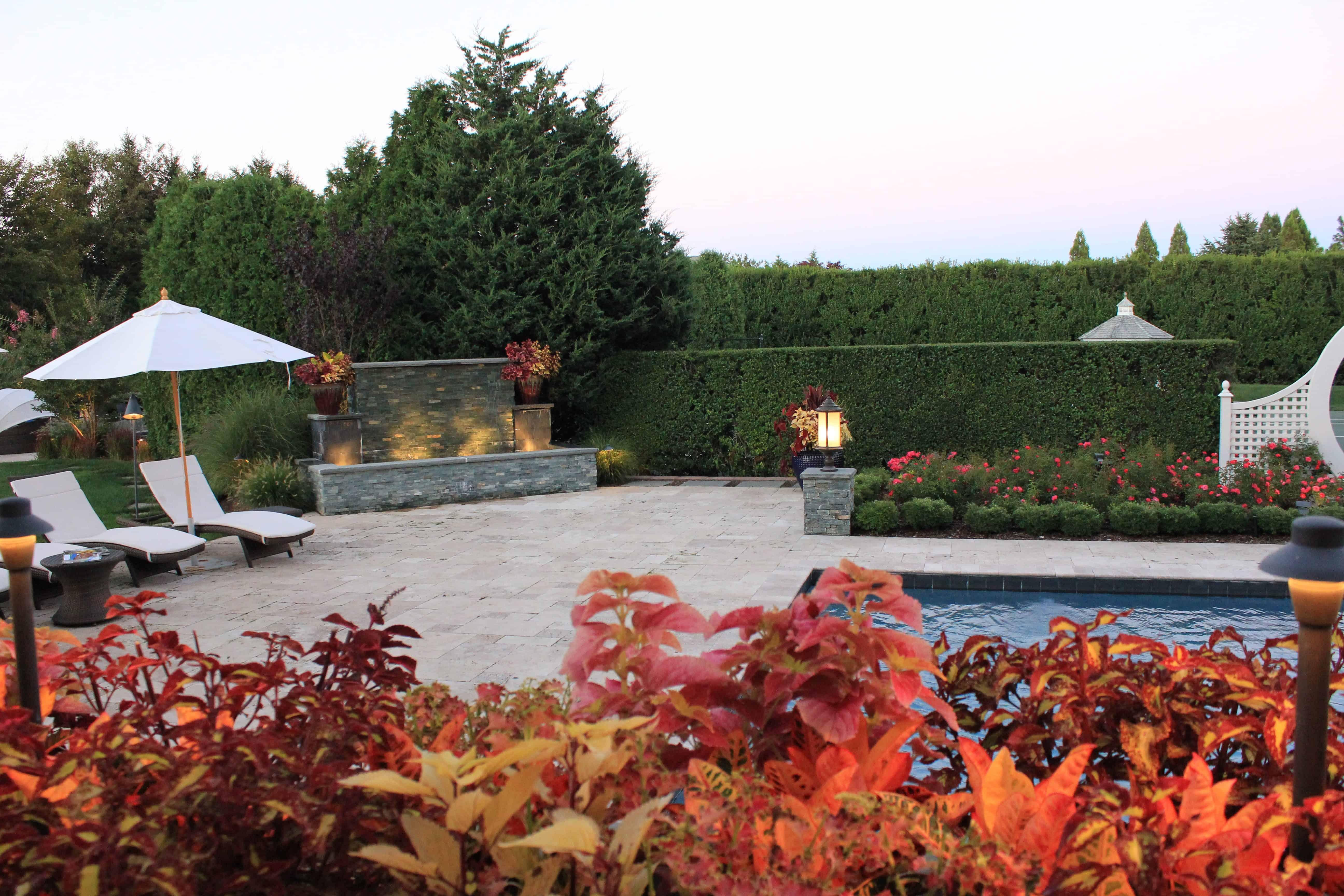 Landscape Plantings - Foreground - Coleus - Background - Carpet Rose and Korean Boxwood - Southampton, Long Island NY