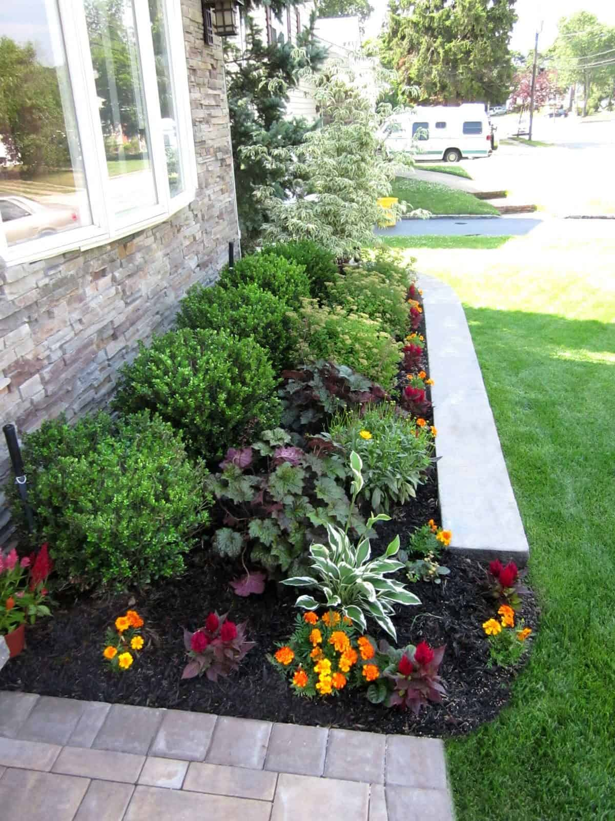 Landscape Plantings - Ilex Compacta, Heuchera Silver Scrolls, Spirea Anthony Waterer, and mixed annuals - Massapequa, Long Island NY