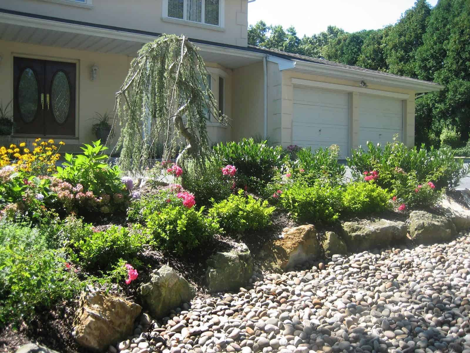 Landscape Plantings - Weeping Blue Atlas Cedar, Cherrylaurel Otto Luyken, and Pink Carpet Rose - Dix Hills, Long Island NY
