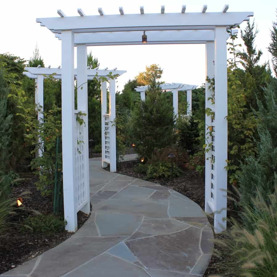 Landscape Plantings - Foreground - Fountain Grass - Background - Mixed Evergreens - Southampton, Long Island NY