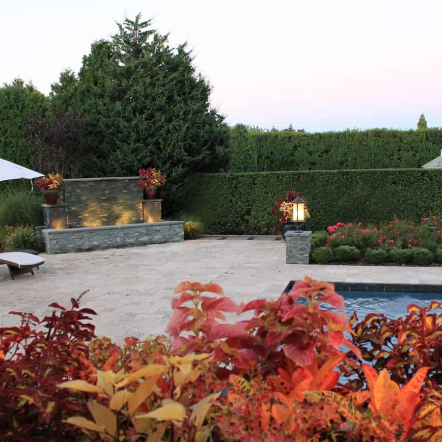 Landscape Plantings - Foreground - Coleus - Background - Carpet Rose and Korean Boxwood - Southampton, Long Island NY
