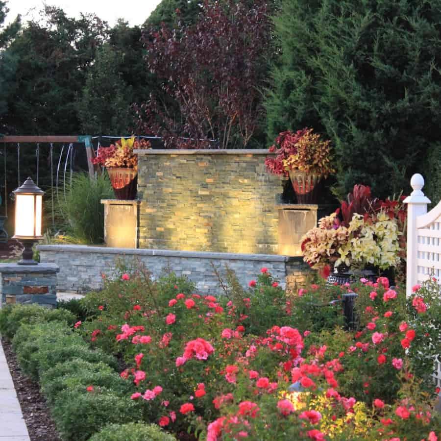Landscape Plantings - Foreground - Carpet Rose and Korean Boxwood - Background - Coleus - Southampton, Long Island NY