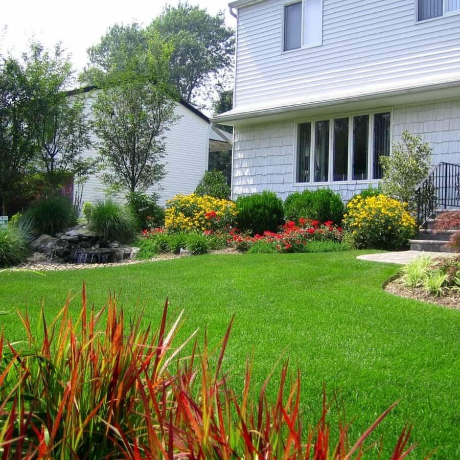 Landscape Plantings - Foreground - Japanese Bloodgood Grass, Background - Kwanzan Cherry Trees - Dix Hills, Long Island NY