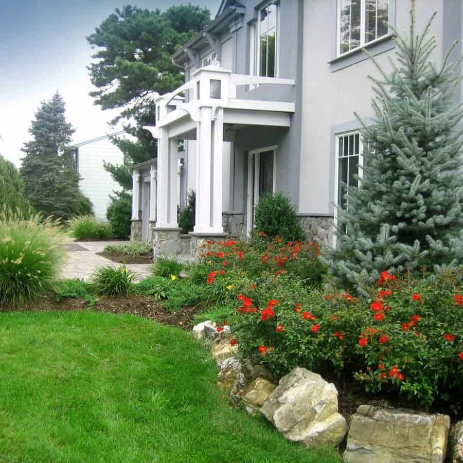 Landscape Plantings - Bakeri Blue Spruce, Red Carpet Rose, and Dwarf Fountain Grass - Dix Hills, Long Island NY