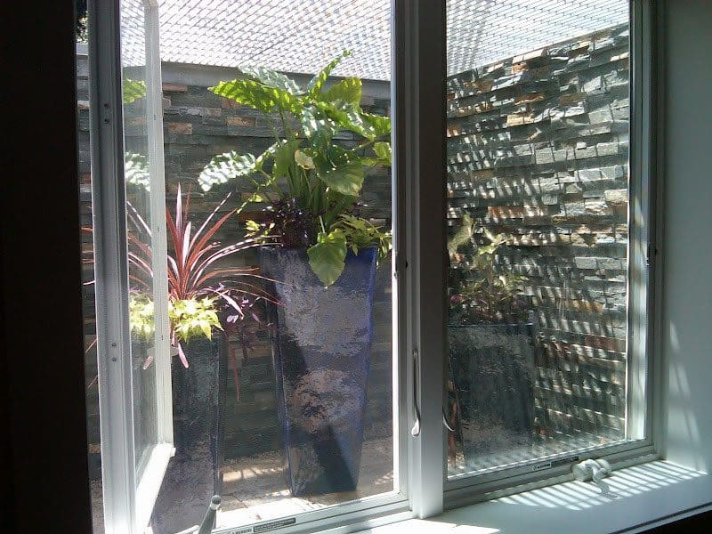 Glazed Pottery planted with various tropicals located in recessed window well of basement - Southampton, Long Island NY