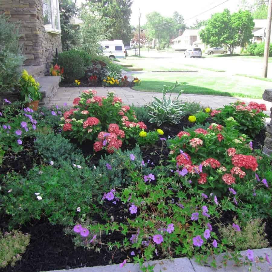 Landscape Plantings - Geranium Rozanne, Hydrangea Pia, and Geranium Wargrave Pink - Massapequa, Long Island NY