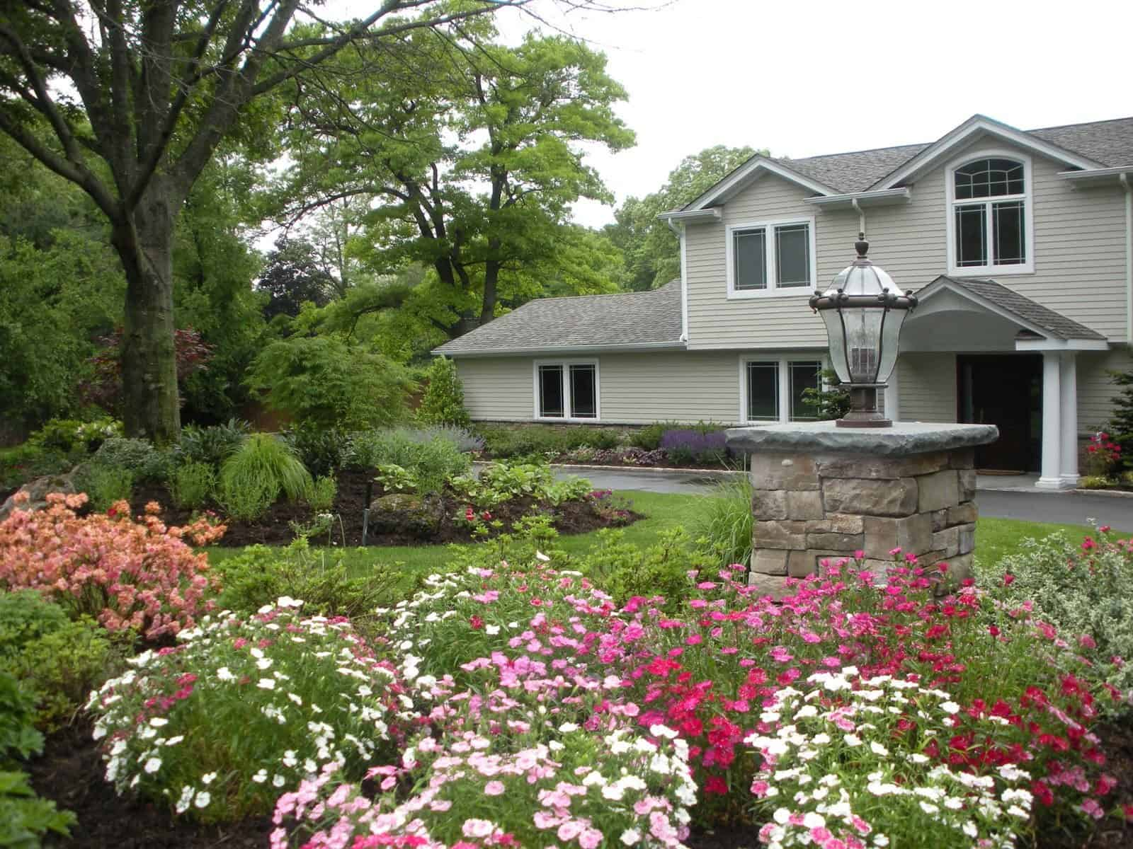 Landscape Plantings - Foreground - Verbena and Azalea - Background - Japanese Maple and mixed perennials - Dix Hills, Long Island NY