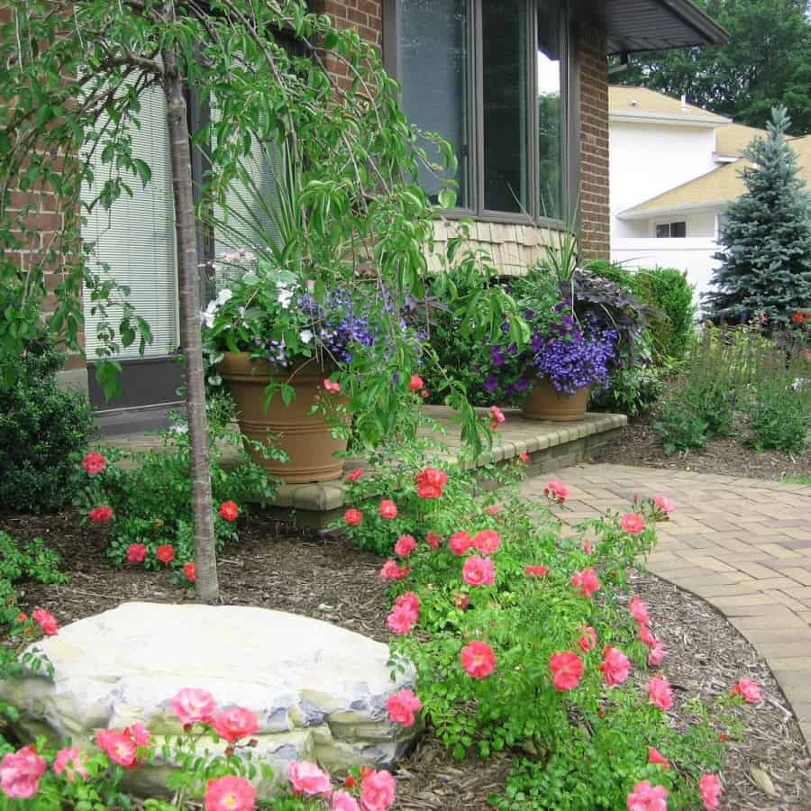 Landscape Plantings - Pink Carpet Rose, Weeping Snow Fountain Cherry, Blue Hoopsi Spruce - Jericho, Long Island NY