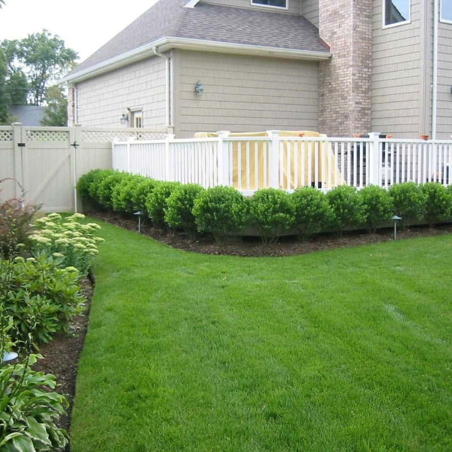 Landscape Plantings - Ilex Glabra Inkberry hedge - Babylon, Long Island NY