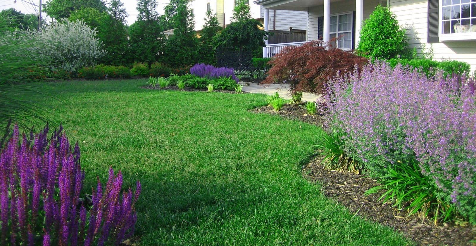 Landscape Plantings - Salvia May Night, Nepeta Walkers Low, Dwarf Japanese Maple - Dix Hills, Long Island NY